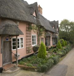 A Suffolk Pink thatched cottage set next to a narrow road and bordered by small green trees and shrubs