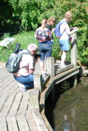 People looking into a pond