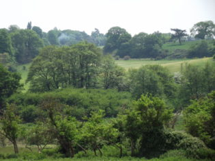 View of the lush green Fynn Valley