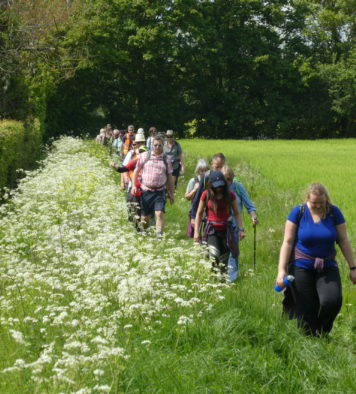 A line of walkers walking through a green meadow with green trees in the background and white flowers to the left